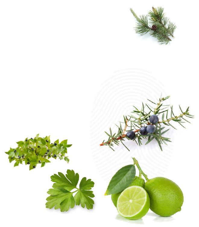 green-bilder